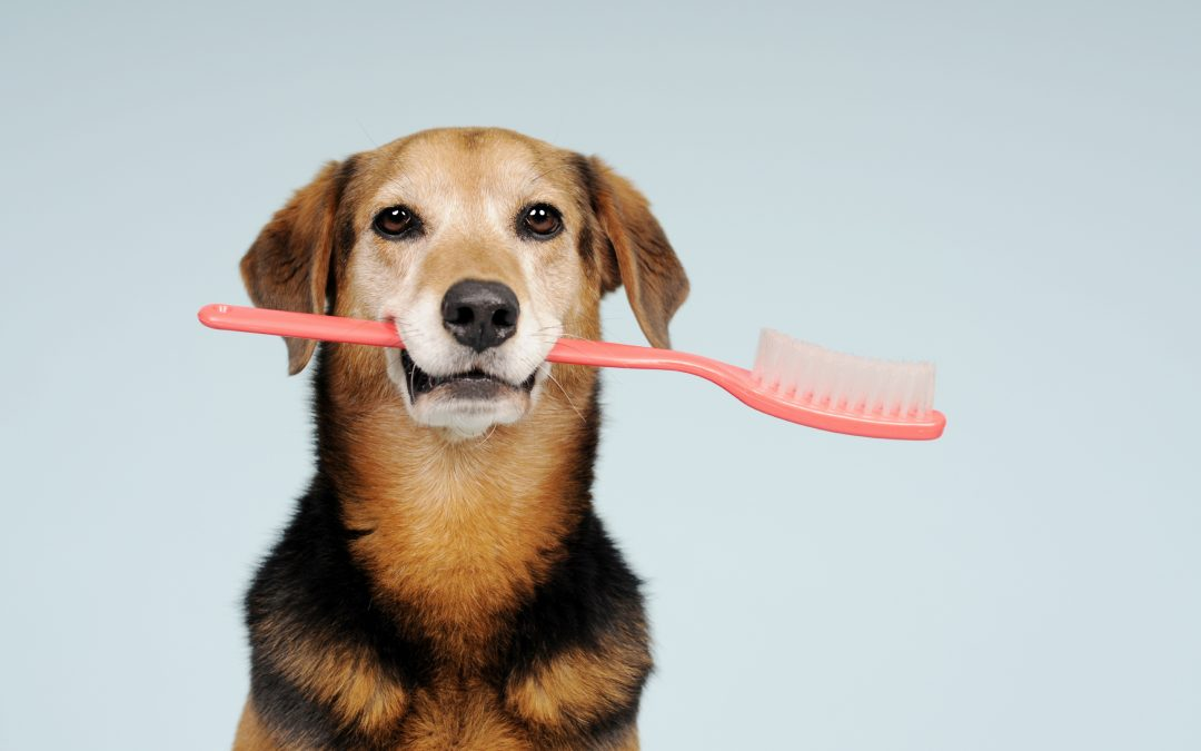 Veterinarian Clinic | Teeth – Window to Health