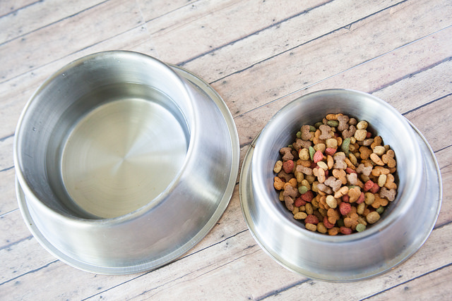 The Components of a Healthy Doggie Diet