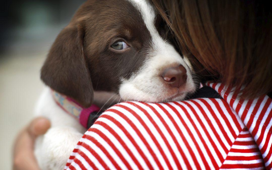Pet Check Up | Puppy Parvo