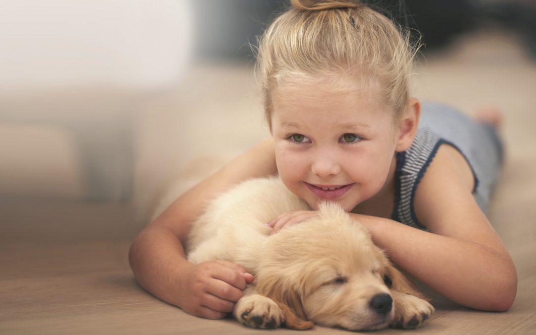 Vets in Gilbert | Puppy Preparation
