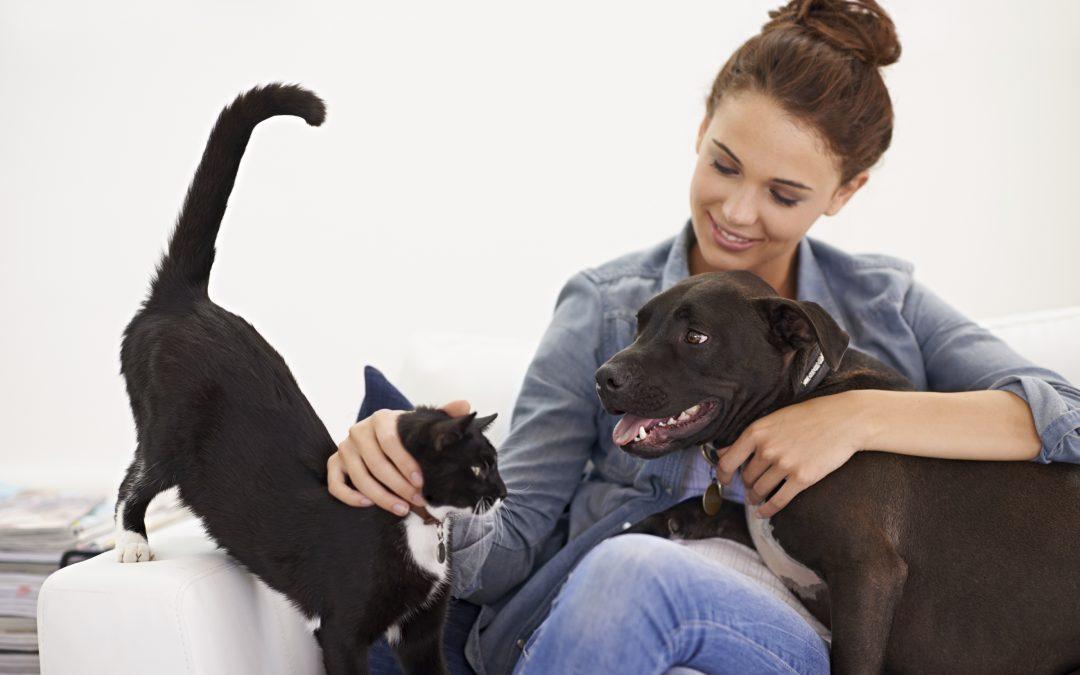 Local Veterinarian | Pet Benefits