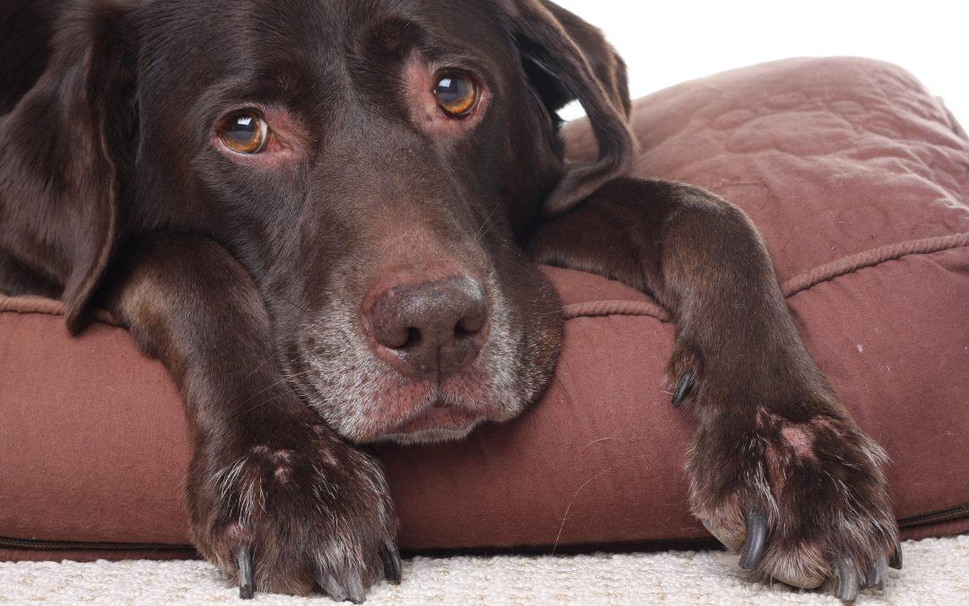 Best Veterinarian | Aging Pets