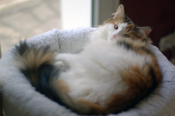 Pregnant Cat Care