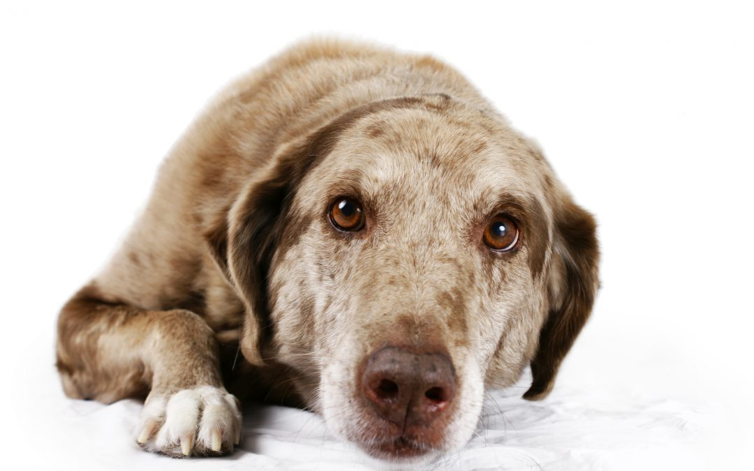 What It Means When Your Dog Vomits
