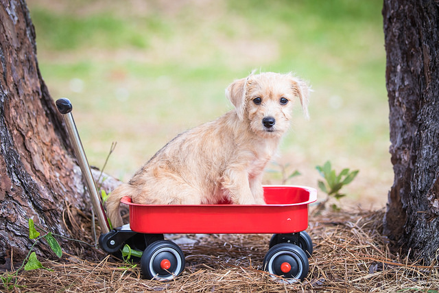 Boarding Your Pet: What You Need to Know