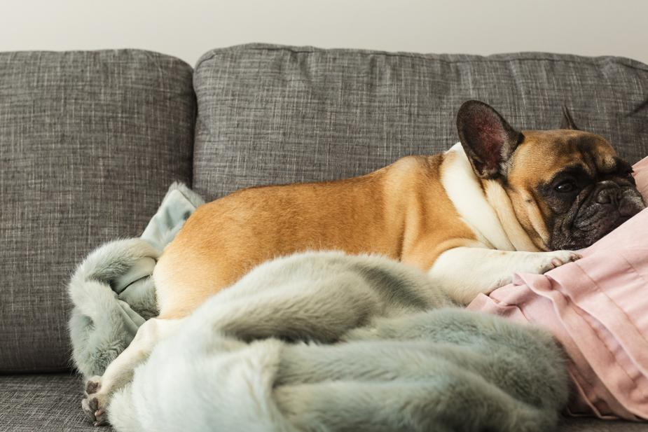 How Do I Know if My Dog Has Contracted Valley Fever in Arizona