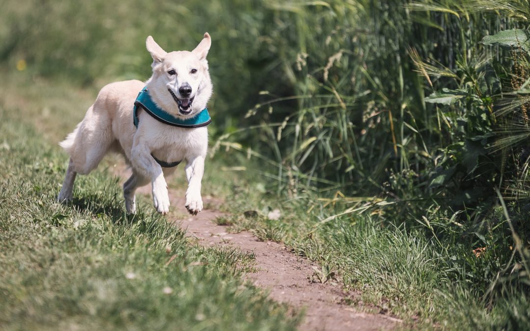How Much Exercise Does Your Dog Need?