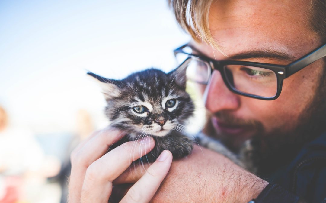 Cat Care 101: A Guide for New Owners | Gilbert, AZ