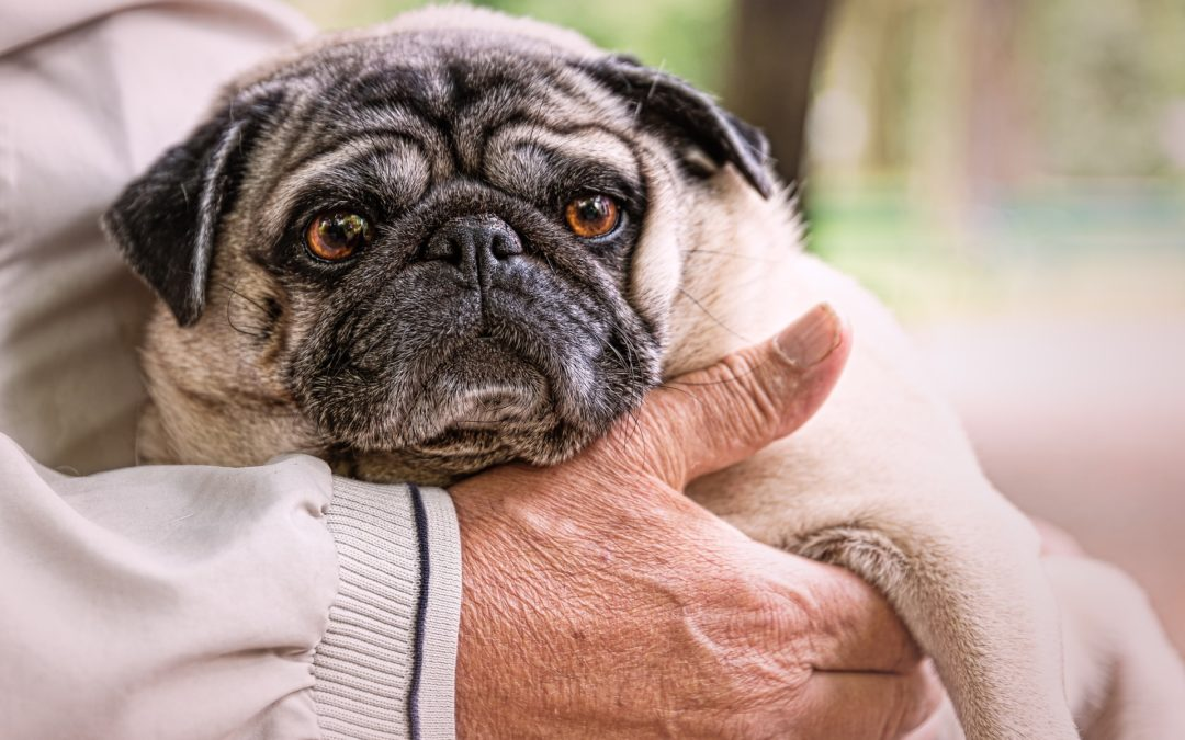 What to Expect with an Aging Dog