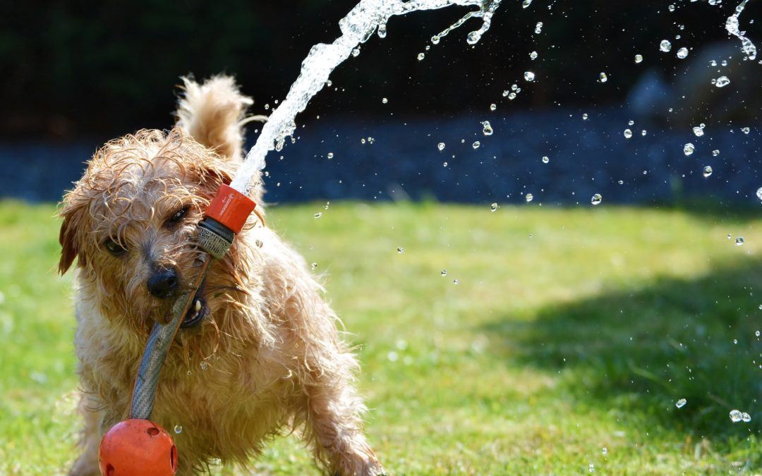 Best Summer Dog Toys to Keep Fido Cool