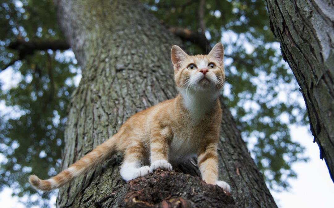 how to take care of an outdoor cat - cat on a tree
