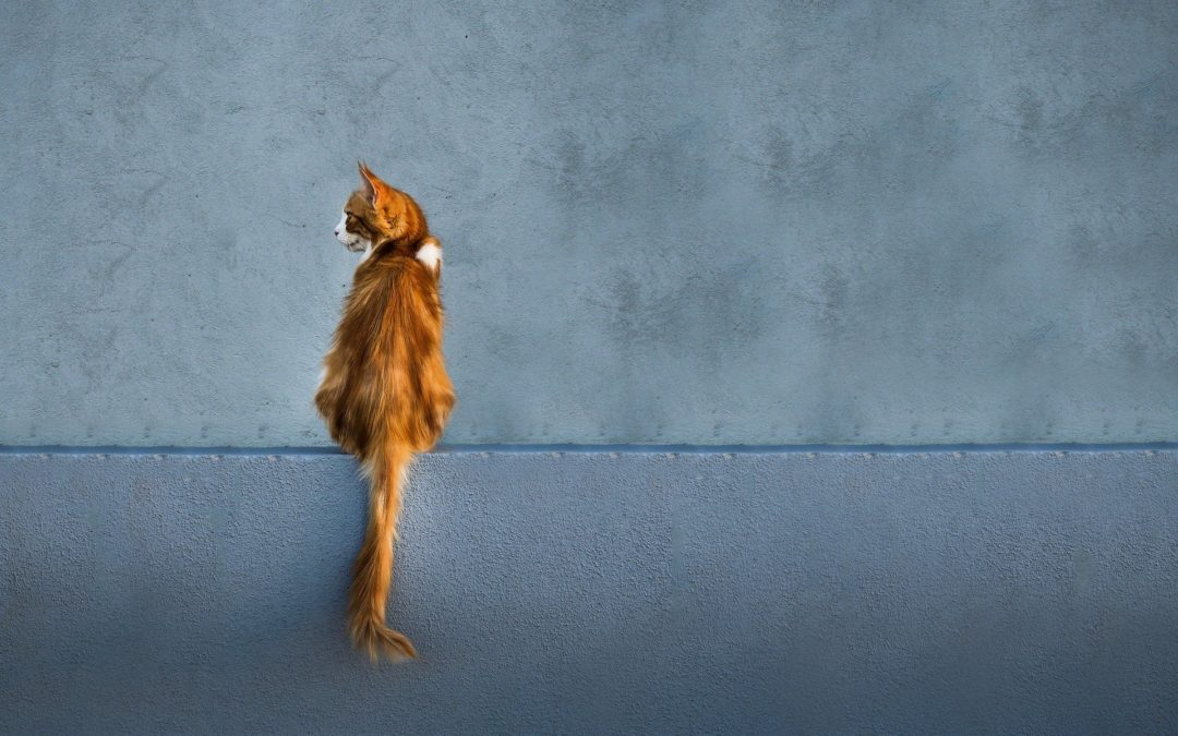 What are Your Cat's Tail Movements Telling You