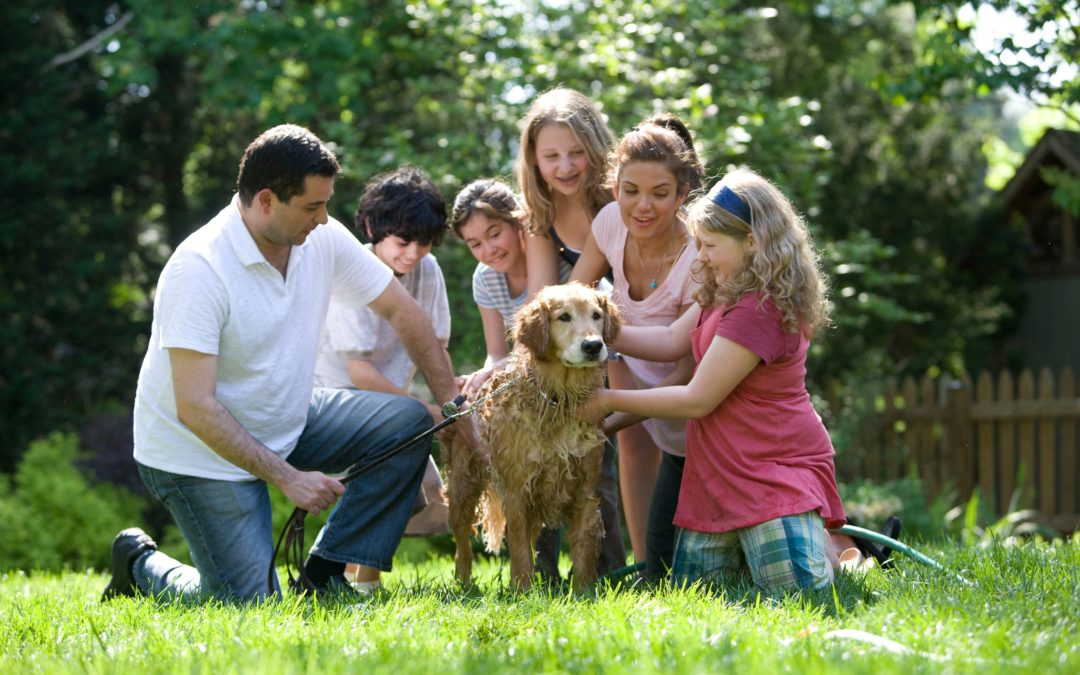 8 Great Dog Breeds for Families with Kids